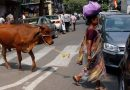 2 Muslim men killed over cow theft in India